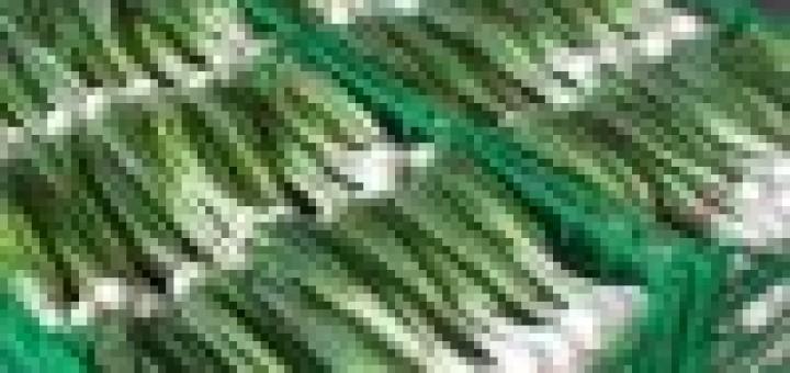Cassetta cipollotti